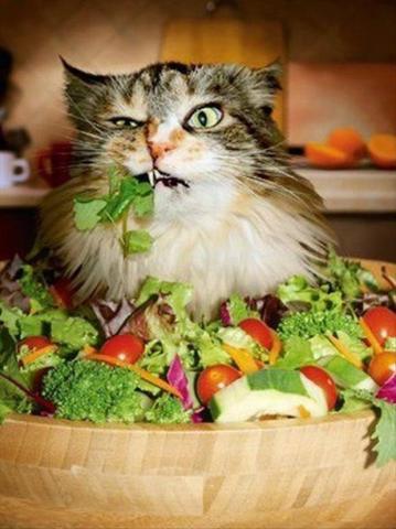 Котэ вегетарианец